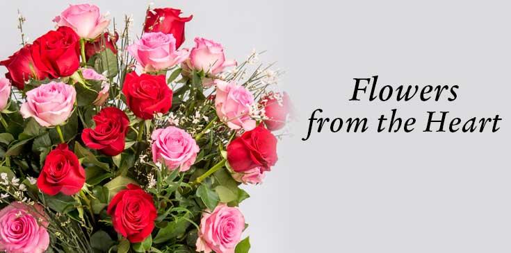 ดอกกุหลาบ-วาเลนไทน์
